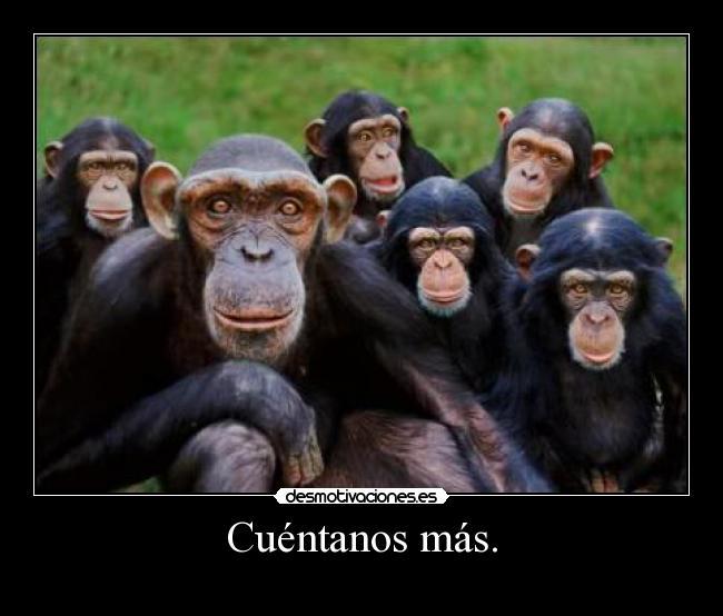 ALERTA ROJA: ¿ha llegado la corrección?-monos_9.jpg