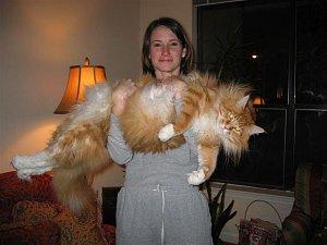 Imagen curiosa-gato-gigante-bolsia.jpg