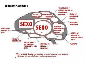 Alegrarse el día-cerebro-masculino.jpg